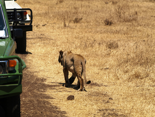 Путешествие по Танзании Валентины БЫСТРИМОВИЧ