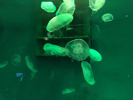 океанариум Даляна