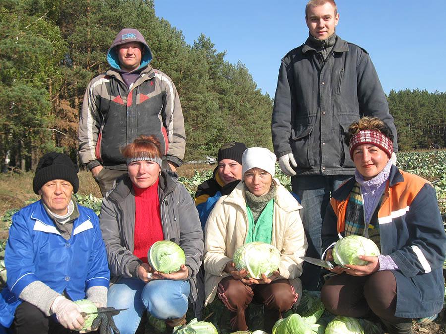 Силами вот таких небольших бригад велась работа по уборке капусты  в поле близ деревни Каменка.