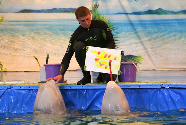 дельфинарий в Мозыре4
