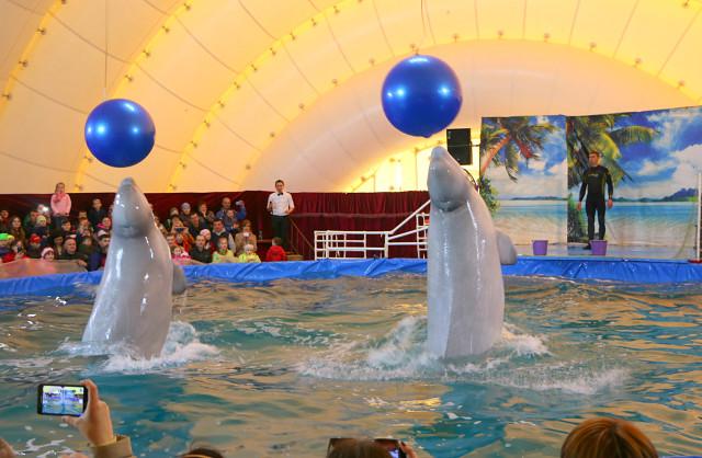 дельфинарий в Мозыре6
