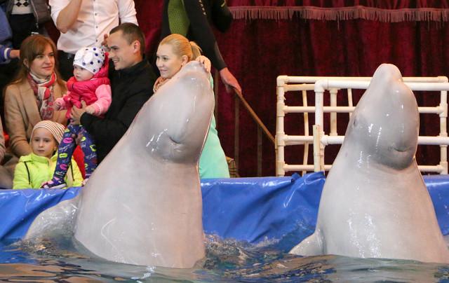 дельфинарий в Мозыре9