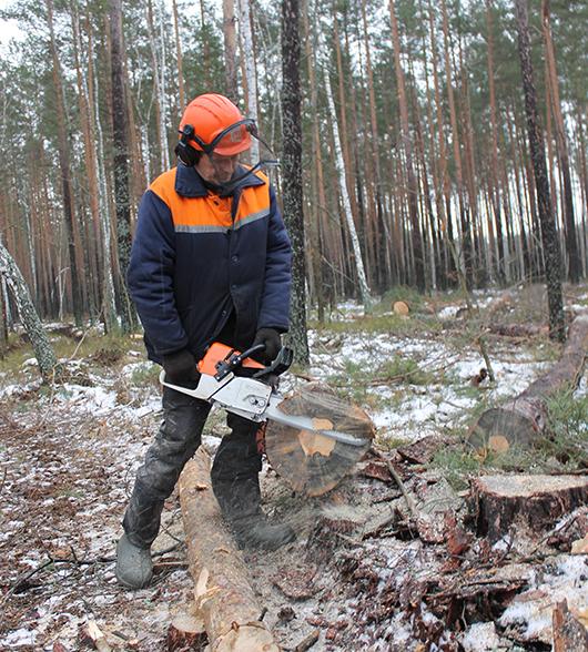 И все же главный герой на лесосеке – вальщик: за работой Алексей Глухоторенко.