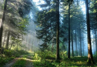 Вступил в силу новый Лесной кодекс Республики Беларусь