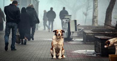 В чем виноваты животные?..