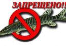 Не ловите, мужики, не ловите!..