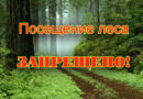 В Мозырском районе действует запрет на посещение лесов
