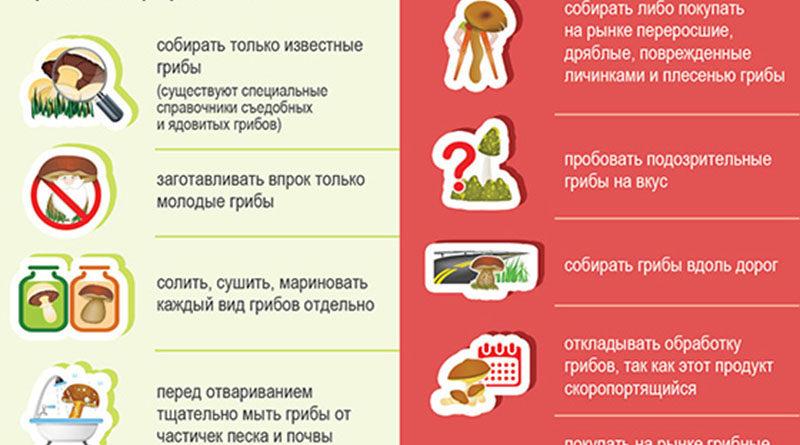 Инфографика: Профилактика отравлений грибами