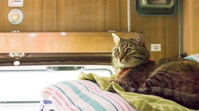 В России домашние животные смогут путешествовать в поездах без хозяев