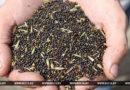 Аграрии Гомельской области завершают уборку озимого рапса