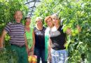 Лучшим работникам тепличного комбината «Мозырской овощной фабрики» вручили Почетные грамоты