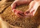 Задача дня: запастись качественными кормами