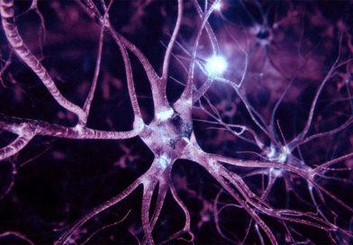 Берегите голову! Как защитить клетки мозга