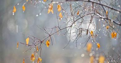 Аномально теплый декабрь. В стране был обновлен первый температурный рекорд декабря