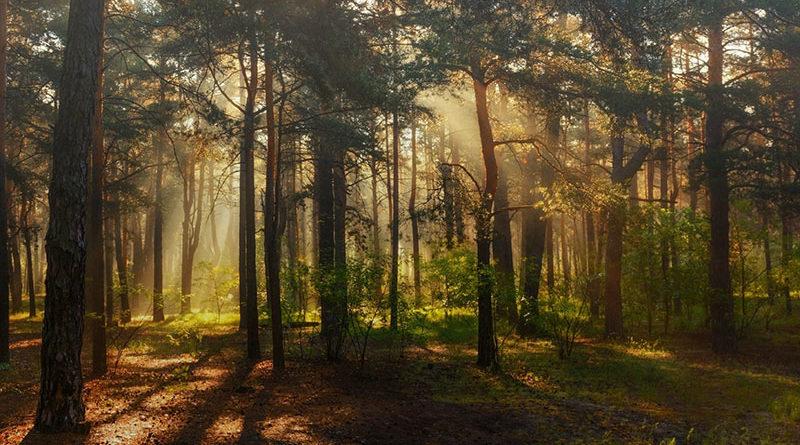 Запрет на посещение лесов снят на всей территории Республики Беларусь