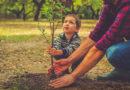 Посади дерево — присоединяйся  к экодвижению «Вместе за чистую и зеленую страну»