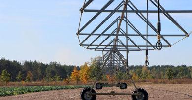 Итоги сезона: на КСУП «Мозырская овощная фабрика» заканчивают уборку овощей