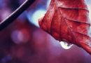 Дожди и порывистый ветер. Погода в Мозыре 9 октября