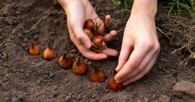 Не сеять в Водолее, надеяться на Козерога: лунный календарь садовода-огородника на май