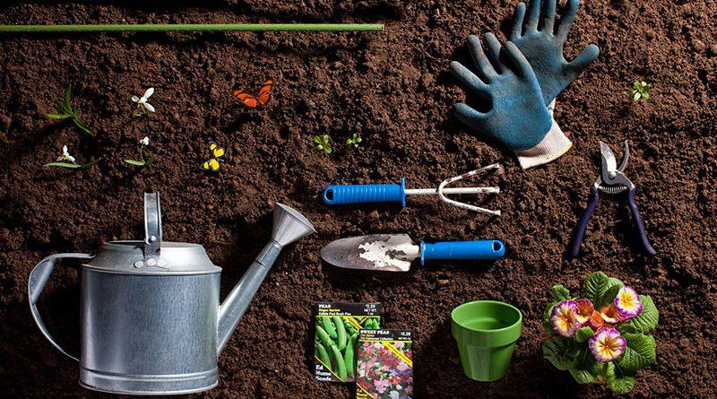 Как правильно подготовить сад к зиме? Рассказывает агроном