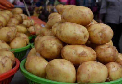 Мозырский район, один из первых в области, завершил посадку картофеля и лука