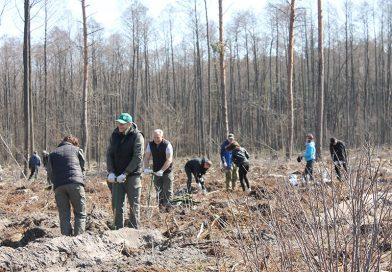 """Посадить дерево под силу каждому. Более 300 мозырян присоединились к республиканской добровольной акции """"Неделя леса-2021"""""""