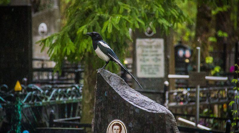 Наводить порядок на кладбище — чья задача?